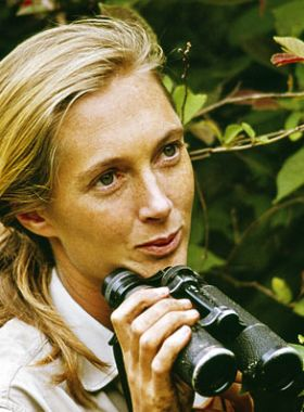 78 best images about JANE GOODALL on Pinterest | Tanzania ...