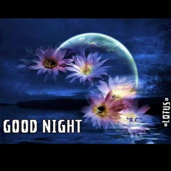 Good Night   Monday Thru Sunday Greetings   Pinterest ...