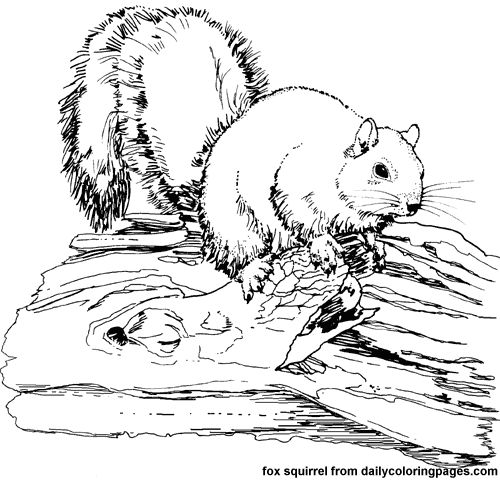 Printable 48 Realistic Animal Coloring Pages 3629 - Free ... | free coloring pages animals realistic