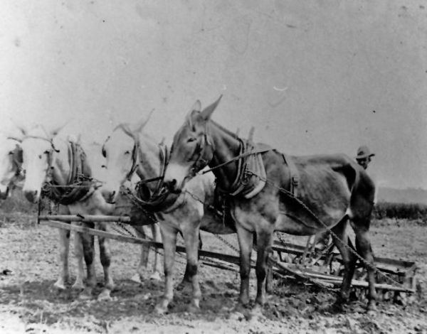 17 Best images about Pioneer Life on Pinterest | Cattle ...