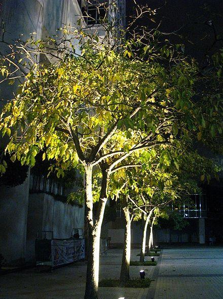 25 Best Ideas About Outdoor Tree Lighting On Pinterest