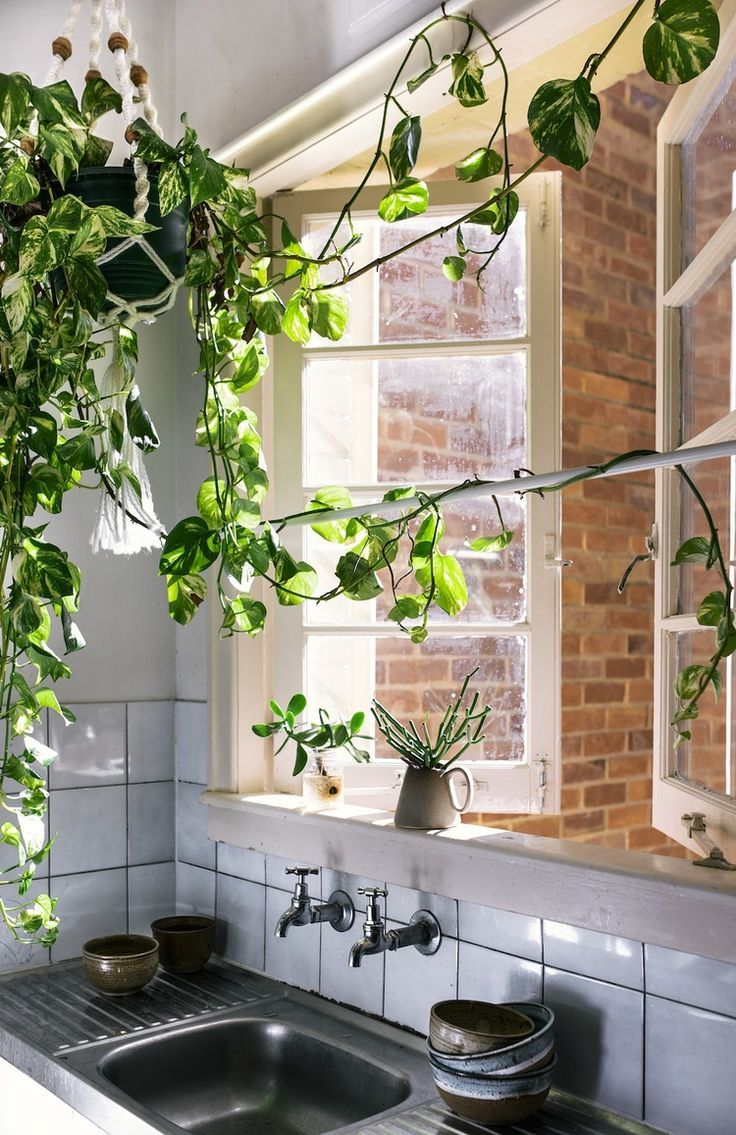 hanging plants in the kitchen image via birdasaurus on sweet dreams for your home plants decoration precautions and options id=90189