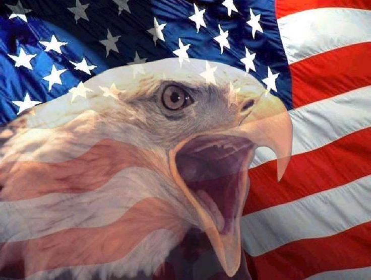 Image result for Patriotic eagle
