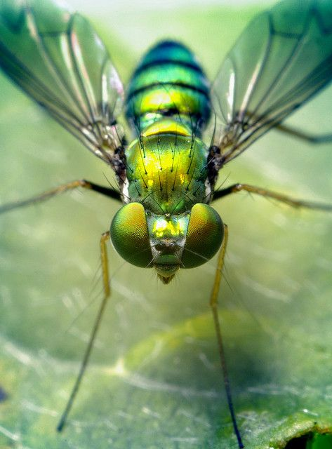 241 best images about Insect Photography by Thomas Shahan ...