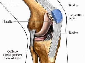 human knee anatomy diagram | Ideas for the House
