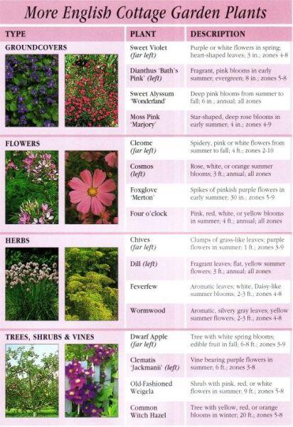 cottage garden plant list More English Garden Plants | MN Garden | Pinterest