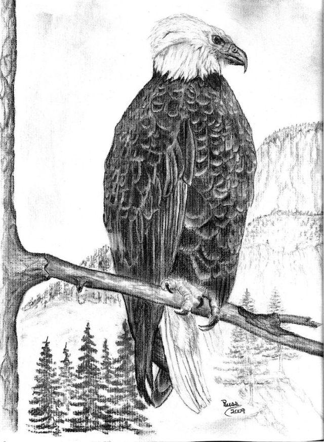 27 best images about Drawing Birds on Pinterest | Portrait ...