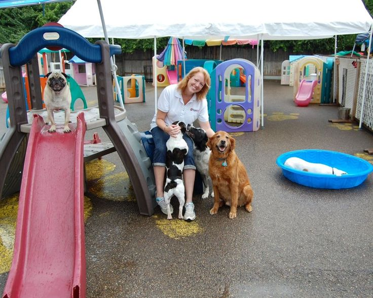 17 Best Images About Dog Daycare Ideas On Pinterest