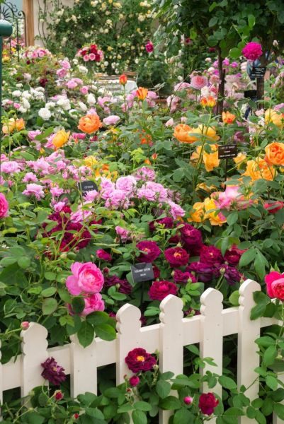 beautiful flower gardens pinterest 12529 best images about flowers and gardens on Pinterest