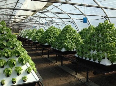 canadian entrepreneur thrives with self developed Commercial Hydroponic Systems Design id=45405