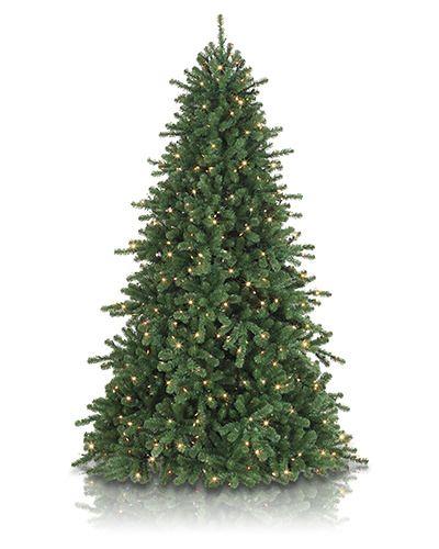 17 Best Ideas About Douglas Fir Christmas Tree On