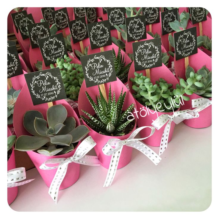 Mini Sukulent Mini Succulent Kakts Cactus Wedding