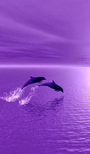 Pretty Cartoon Dolphin