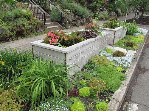 sidewalk garden 17 Best images about Hell Strip Gardening on Pinterest