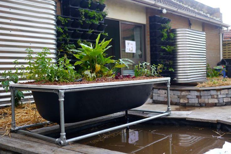 Bathtub Aquaponics Installed Planting Day At 107 Rooftop