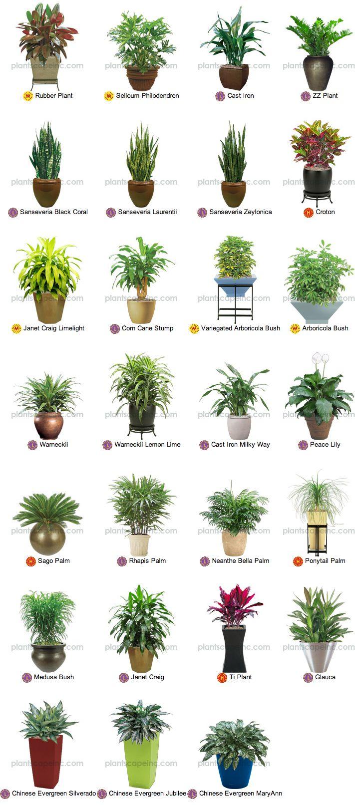 Best Kitchen Gallery: Home Plants Types Home Furniture Design Kitchenagenda of Household Tropical Plants on rachelxblog.com
