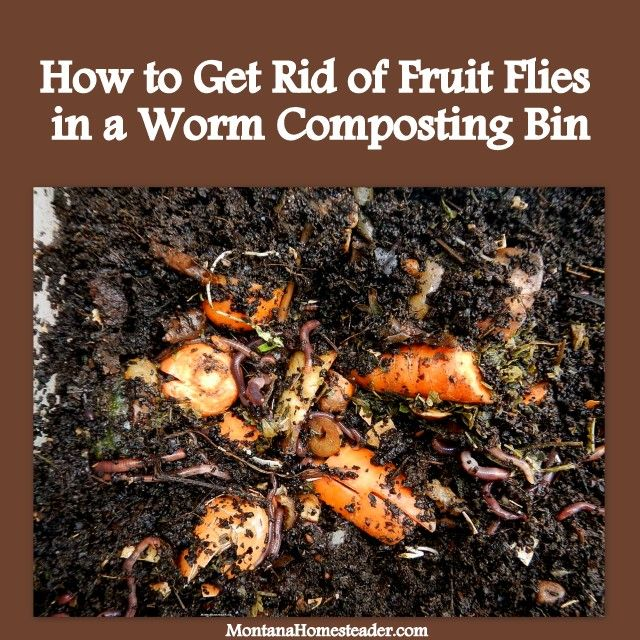 How to Get Rid of Fruit Flies in a Worm Composting (Vermicomposting) Bin. We did these three simple things and no longer have