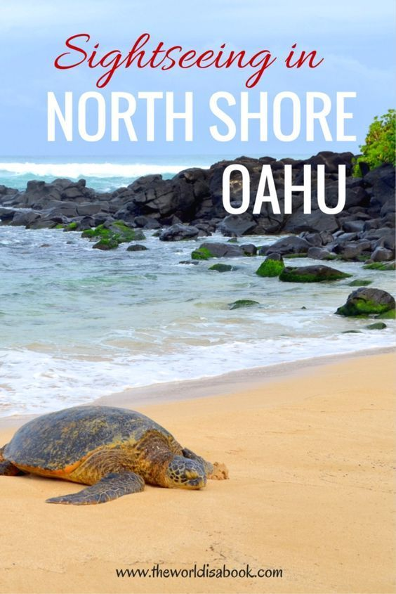 Surfers and Turtles: Sightseeing in North Shore Oahu ...