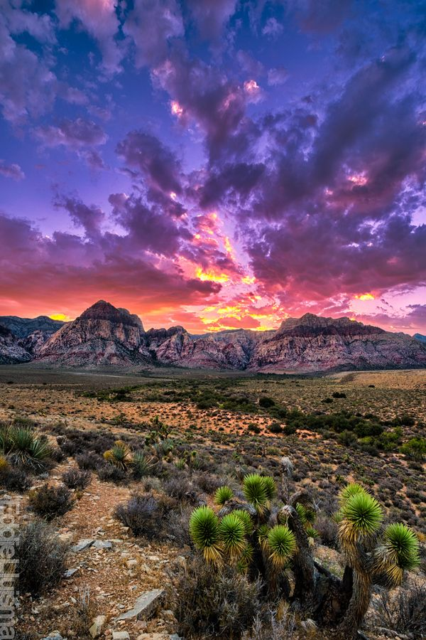 Red Rock Canyon, Nevada (Such a beautiful area for hiking and only 20 minutes ou