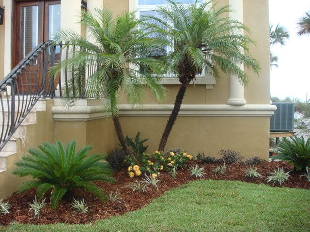 25+ Best Ideas About Palm Trees Landscaping On Pinterest