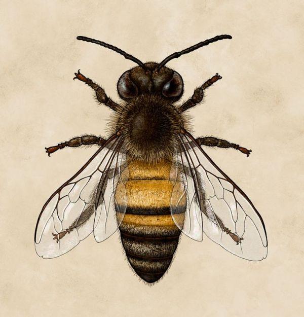 25 best ideas about Bee illustration on Pinterest Bee