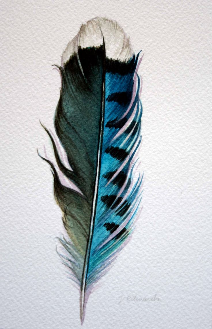 feathers | Original Watercolor – Feather Study 178 Blue Jay Feather – Nightly …