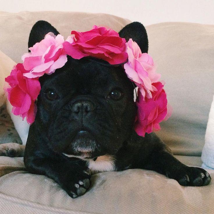 17 Best Ideas About French Bulldog Wedding On Pinterest