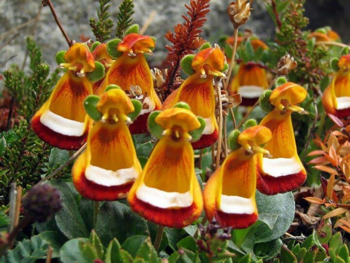 17 Best Images About Flores Exoticas On Pinterest Portal