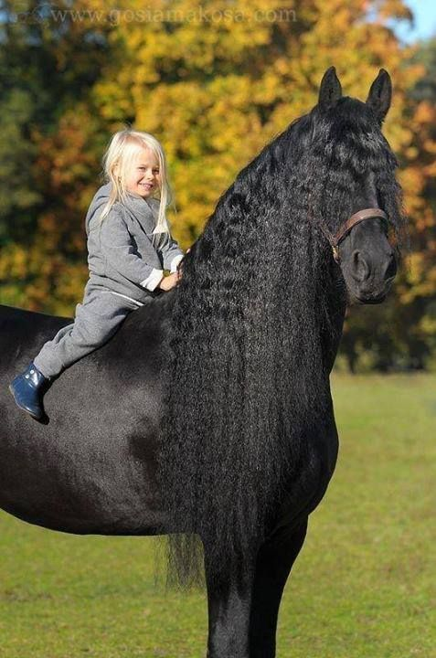 365 best images about Friesians on Pinterest | Baroque ...
