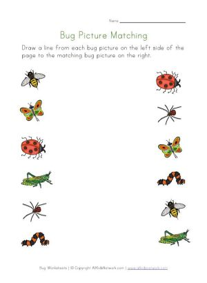 31 best images about Preschool  Bugs & Insects on Pinterest | Insects, Preschool ideas and