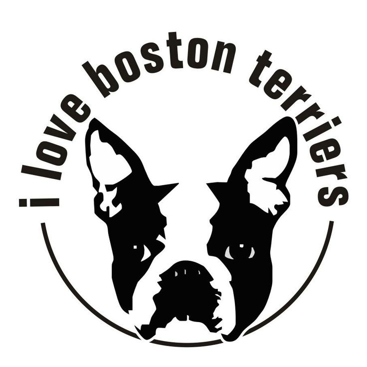 Download I love Boston terrier... ... | boston | Pinterest | Wells ...