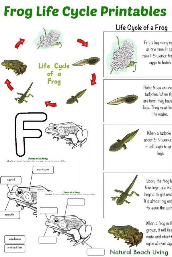 1000+ images about Preschool: Pond Life unit on Pinterest ...