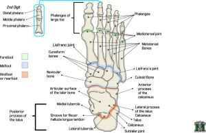 17 Best images about Documentation for Reflexology on