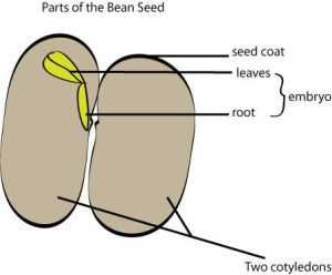 Growing with Science: Let's Learn About Seeds | Plant