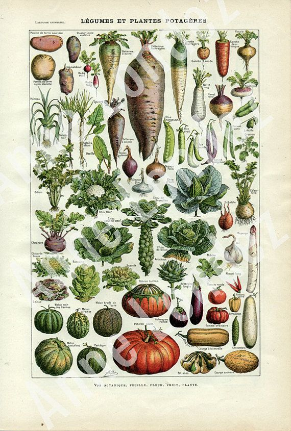 vintage french dictionary page botanical illustration vegetable print 20s wall hanging print on kitchen decor paintings prints id=41239