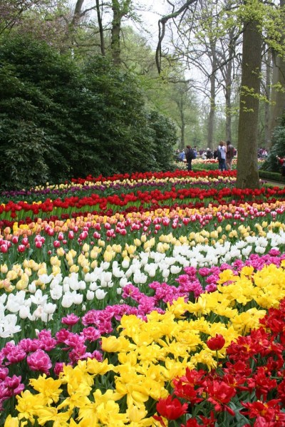 beautiful flower gardens pinterest 31 best images about Photos of beautiful flower garden in