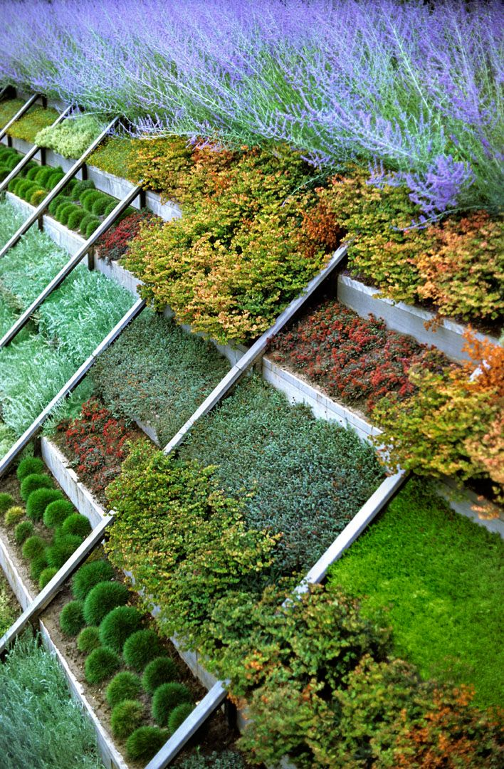 104 best images about Slope Plantings on Pinterest ... on Backyard Hill Landscaping Ideas  id=21839