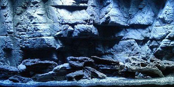 1000 Images About Aquarium Backgrounds On Pinterest