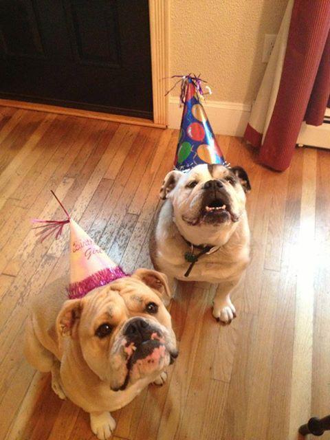 25 Best Ideas About Happy Birthday Pug On Pinterest