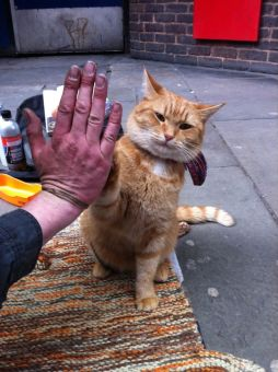 Image result for How to give cat a high five
