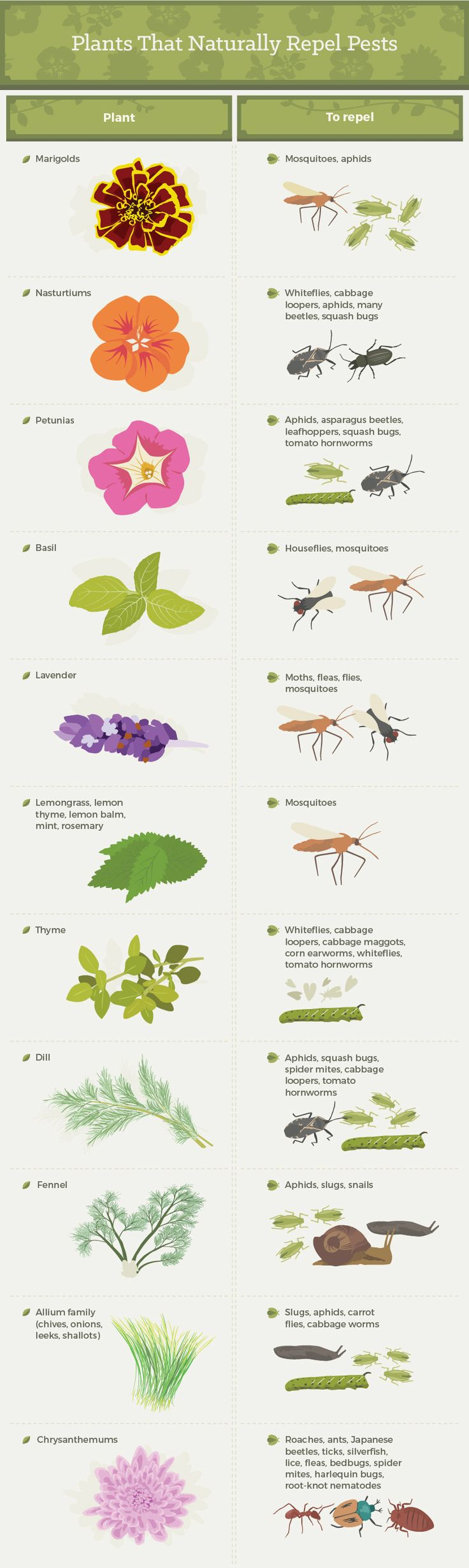 Plants that Naturally Repel Pests