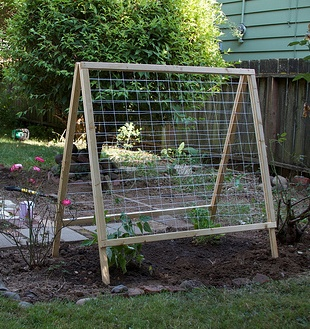Garden Trellis For Beans And Peas Folds Away After The