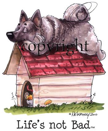 103 Best Images About Norwegian Elkhound Amp Moose Stuff On