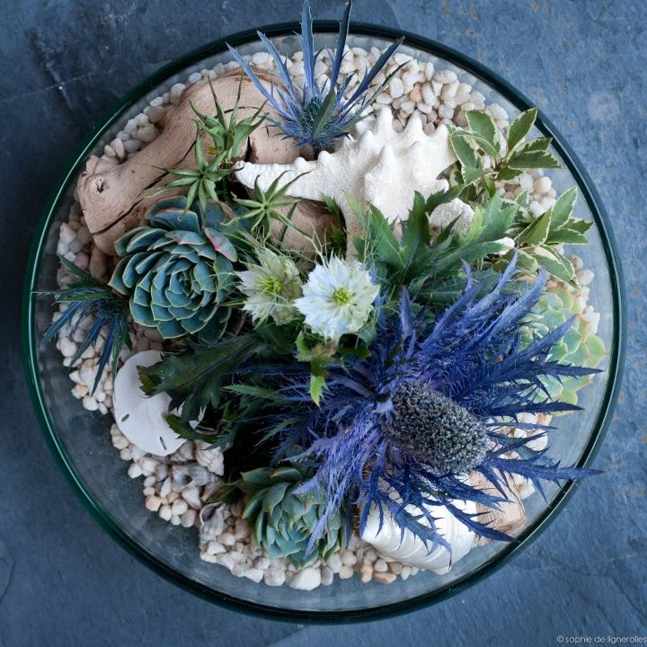 Succulent Arrangement From Top Looking Down Sand Or