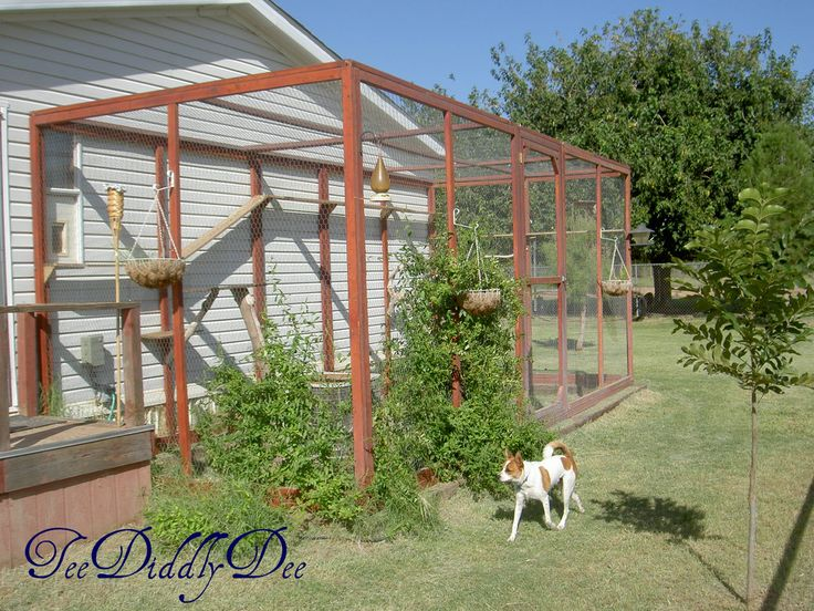 How To Build A Spacious Outdoor Cat Enclosure Natural Perches And Walkways Just Like At The Zoo
