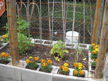 Marigolds Around The Perimeter Concrete Block Raised Bed