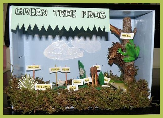 Frog Project Habitat Diorama School Projects Amp Ideas Modern Home