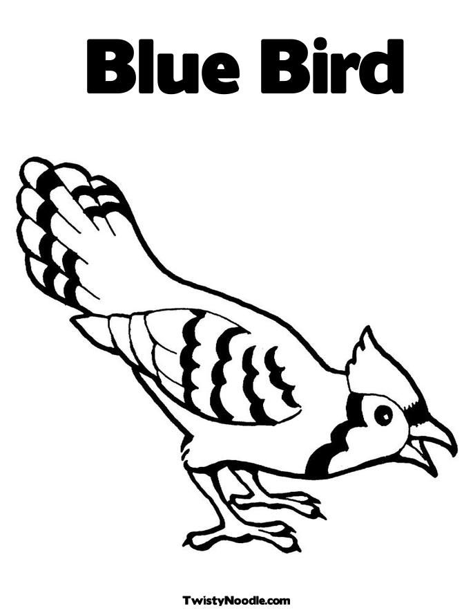 17 best images about blue jay theme on pinterest