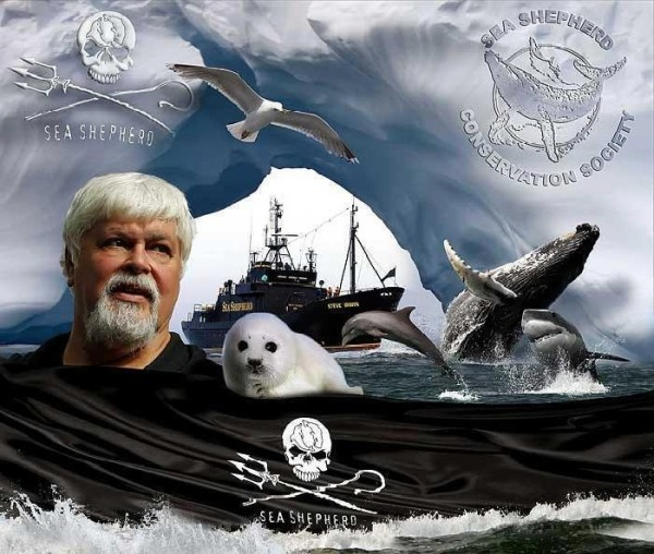 39 best images about Sea Shepherd Conservation Society on ...