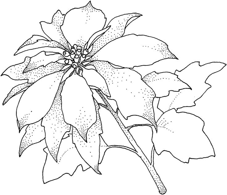 0 images about line drawings on pinterest  coloring
